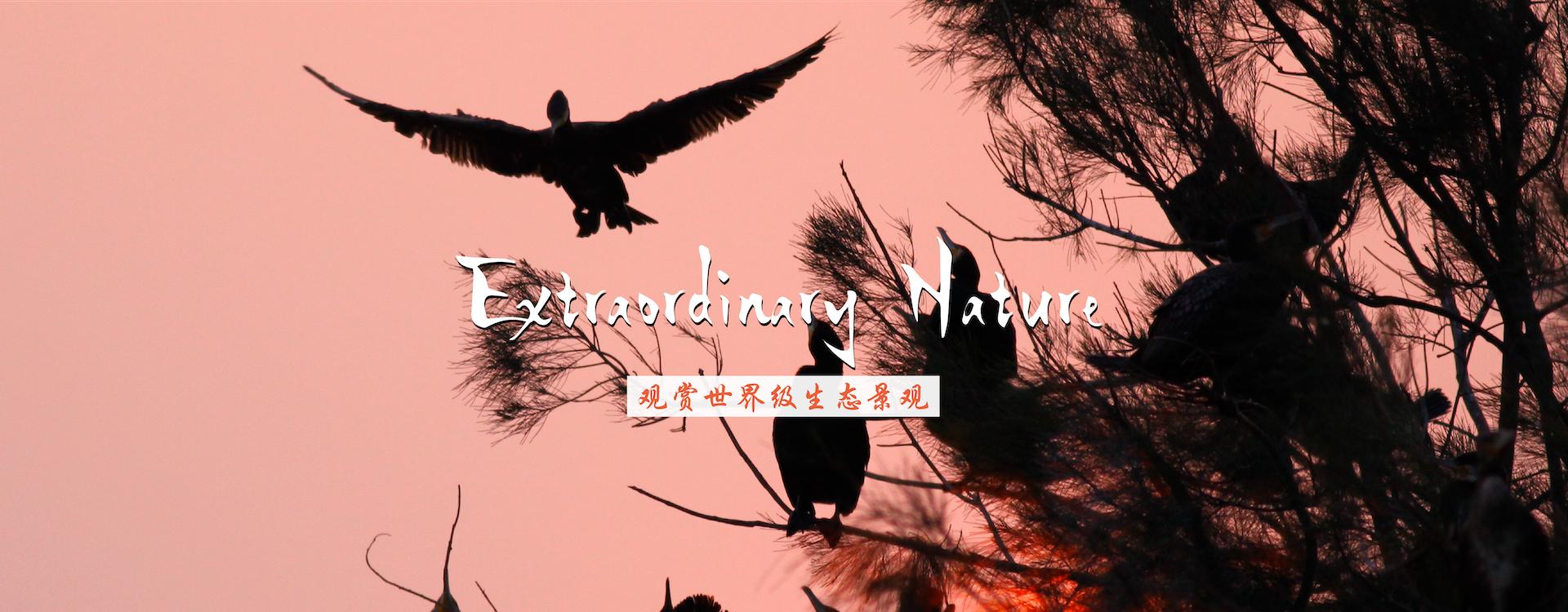 观赏绝美的候鸟飞翔天堂