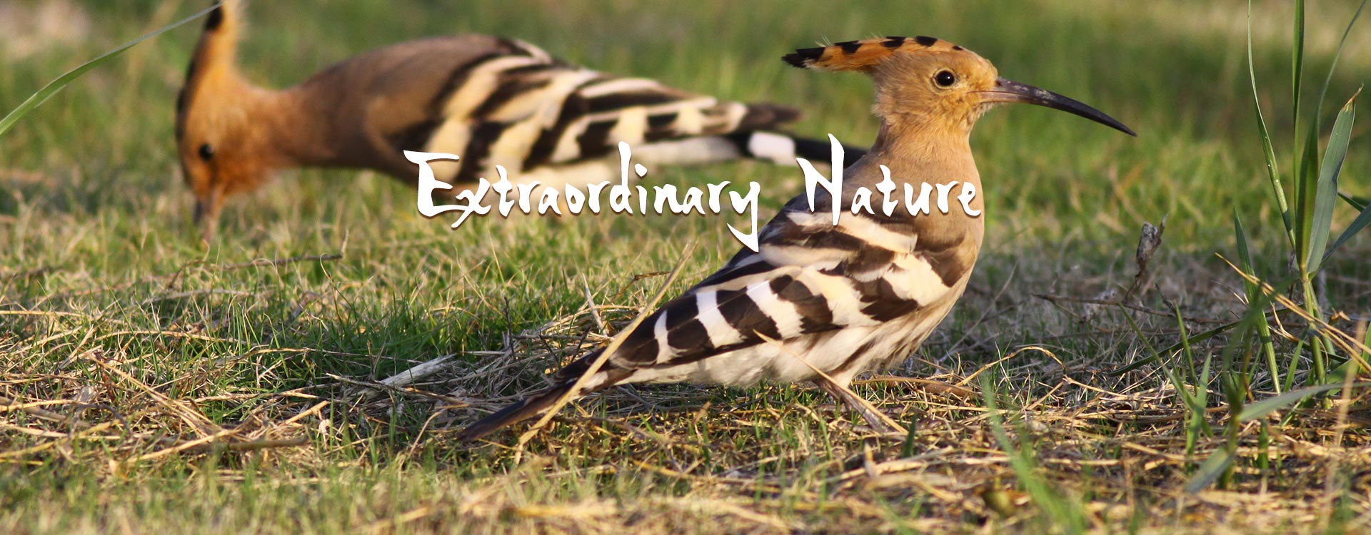Extraordinary Nature